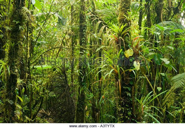 panama-darien-national-park-cloud-forest-ca-5000-feet-pirre-mountain-a3tytx